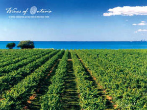 Wine_Country_Pic